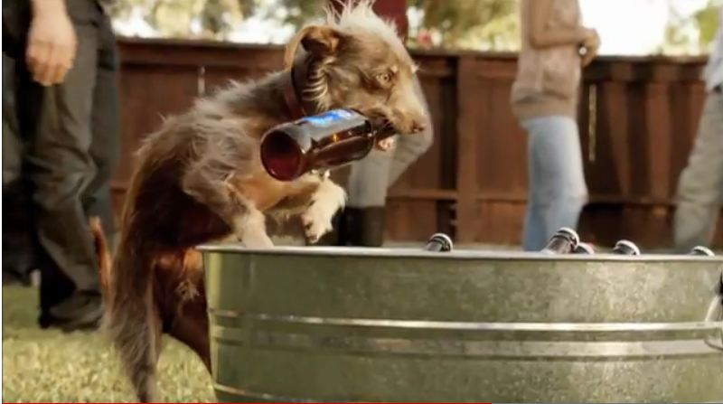 My business tidbitz bud light it doesnt get any cuter than weego the little rescue dog made famous in the bud light commercial at least there is still some talent in the ad mozeypictures Choice Image